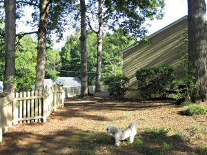 The huge side yard that got zero sunlight until we chopped down a few trees